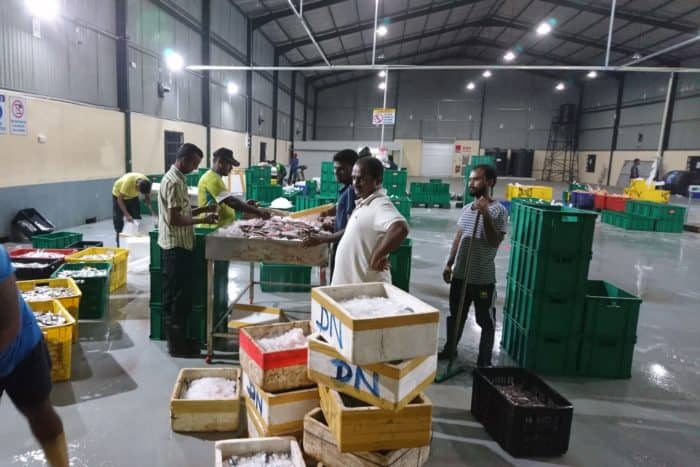 Mars 6000 Fisf factory Sri Lanka